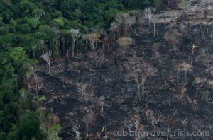 การตัดไม้ ทำลายป่าในบราซิลเพิ่มมากขึ้น